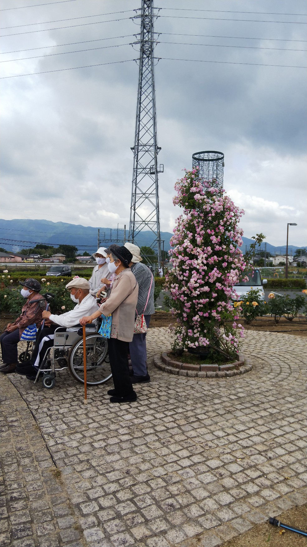橿原運動公園  バラ園